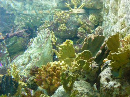 Será en Matanzas campeonato nacional de fotografía subacuática